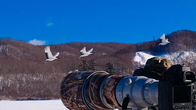 丹頂とカメラマン